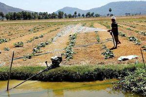 Kiên Giang: Chủ động phòng chống hạn, mặn mùa khô