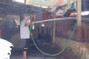 Xử lý nghiêm các trường hợp trục lợi từ dịch tả lợn châu Phi