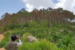 'Để xảy ra tình trạng hủy hoại rừng như ở Lâm Đồng là không thể chấp nhận'