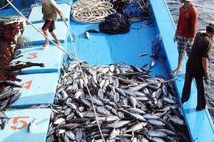 Gỡ 'thẻ vàng' cho hải sản: Sẽ xử lý nghiêm chủ tàu vi phạm