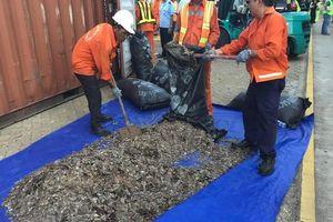 Phát hiện 5.264 kg vẩy tê tê giấu sau lô hạt điều