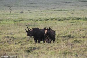 Voi, tê giác, đại bàng tuyệt chủng ngay trong thế kỷ 21?