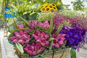 Nhẹ nhàng hương sắc hoa sen đầu mùa