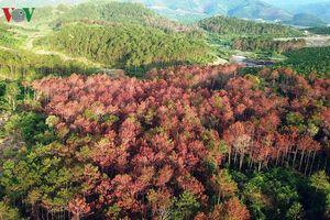 Diện tích rừng Tây Nguyên tăng nhưng nạn phá rừng diễn biến phức tạp