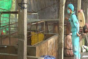 Dịch tả lợn châu Phi tấn công ồ ạt 6 tỉnh miền tây