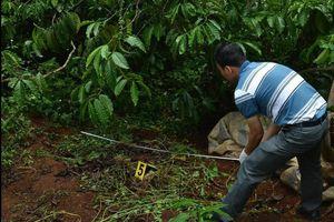 Cảnh sát khám nghiệm vụ 3 bà cháu bị giết, chôn xác trong rẫy cà phê