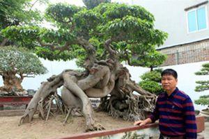 Cận cảnh những chậu cây triệu đô của đại gia Phú Thọ