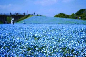 6 lí do không thể bỏ qua Fukuoka khi du lịch Nhật Bản