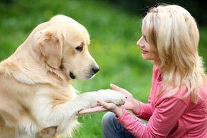 Người phụ nữ lập di chúc để nhà 2 tỷ cho chó cưng
