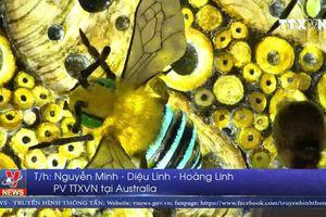 Tưng bừng lễ hội ánh sáng lớn nhất thế giới tại Australia