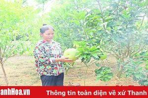 Huyện Như Xuân chuyển đổi diện tích mía, sắn kém hiệu quả sang trồng cây ăn quả cho giá trị kinh tế cao