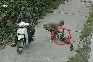Clip: Cẩu tặc chích điện trộm chó nhanh như chớp gây phẫn nộ