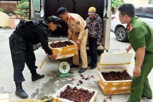 Bắt giữ gần 50 kg tôm hùm đất nhập lậu từ Trung Quốc