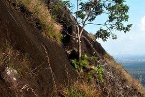 Người đàn ông đi hái lan rừng bị kẹt giữa vách núi tử vong