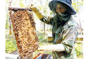 Mật ong chan cơm nguội