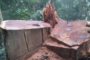 Bắt 2 đối tượng khai thác gỗ trái phép