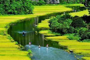 Mê hồn với Mùa vàng Tam Cốc từ đỉnh 'Vạn lý trường thành Việt Nam'