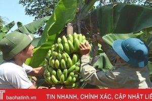 Không lo đầu ra sản phẩm, nông dân Kỳ Đồng nhà nhà làm kinh tế vườn
