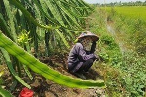 Chuyển đổi đất lúa kém hiệu quả sang trồng cây ăn trái