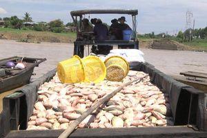 Gần 1.000 tấn cá bè chết trên sông La Ngà: Nguyên nhân do rác thải, ô nhiễm