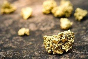 Phát hiện loài nấm có khả năng 'hút' vàng trong lòng đất