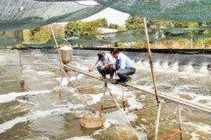 Chú trọng phát triển nông nghiệp công nghệ cao
