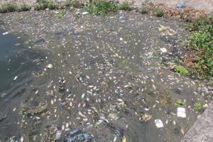Cá chết nổi trắng hồ điều hòa ở Quảng Nam