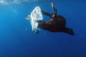 Cá mặt trời bị sư tử biển nuốt sống vẫn phản ứng lạ