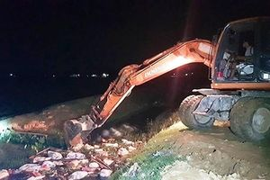 Hà Tĩnh: Lợn chết thả trôi ngập kênh có virus tả châu Phi