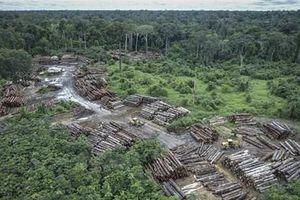 Mất hơn 900.000 ha rừng Amazon trong vòng 30 năm