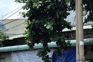Nóng: Kinh hoàng phát hiện cả gia đình 3 người tử vong trong phòng trọ