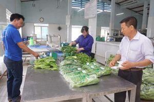 Tập trung phòng trừ sâu bệnh hại trên rau an toàn