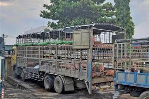 Quảng Nam phát hiện xe chở heo nhiễm bệnh dịch tả heo Châu Phi