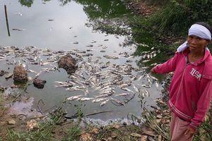 Diễn biến vụ công an xã bị tố làm cá chết ở Đồng Nai