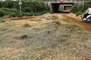 Rơm khô, thóc lúa chất đống, chắn ngang đường gom trên đại lộ Thăng Long