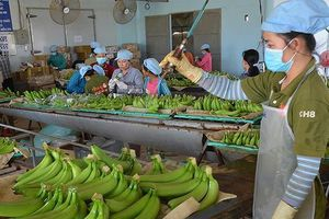 Xung đột thương mại: Hàng Việt bán sang Mỹ tăng mạnh