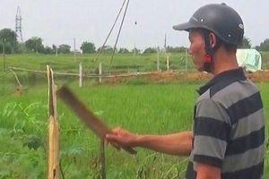 Chặt phá hơn 100 gốc xoan trong cơn say để trả thù