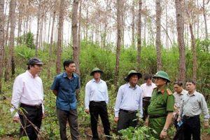 Khởi tố, bắt giam ba đối tượng hủy hoại hơn 10ha rừng thông