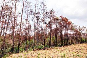 Bắt 3 đối tượng đầu độc rừng quy mô lớn chưa từng có ở Tây Nguyên