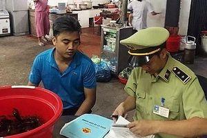 Quảng Ninh: Phát hiện 2 cơ sở kinh doanh tôm càng đỏ