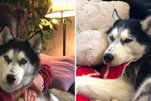 Kỳ lạ: Chú chó 3 lần 'ngửi' thấy bệnh ung thư của chủ