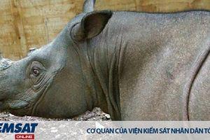 Malaysia: Cá thể Tê giác đực Sumatra cuối cùng đã chết
