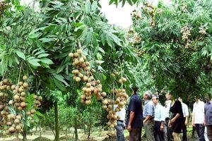 Phát triển vùng trồng cây ăn quả chất lượng