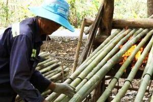 Nghề lạ ở An Giang: Đốt lửa nướng tầm vông ở vùng Bảy Núi