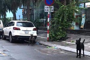Bị phạt 700.000 đồng vì 3 con chó làm cả tuyến phố Hà Nội hoang mang