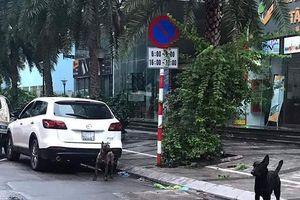 Chặn cả đoạn phố ở Hà Nội để bắt 3 con chó cảnh không rọ mõm