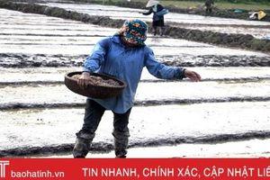 Lúa hè thu ở Hà Tĩnh sẽ kết thúc gieo cấy sớm gần 20 ngày