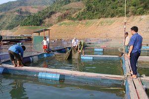 Sơn La: Từ núi xuống sông Đà nuôi cá đặc sản mà khấm khá hẳn lên