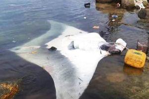 Ngư dân đảo Lý Sơn lại bắt được cá đuối 'khủng', nặng hơn nửa tấn