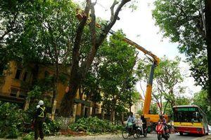 Hà Nội dự kiến cắt tỉa gần 60 nghìn cây xanh trước mùa mưa bão